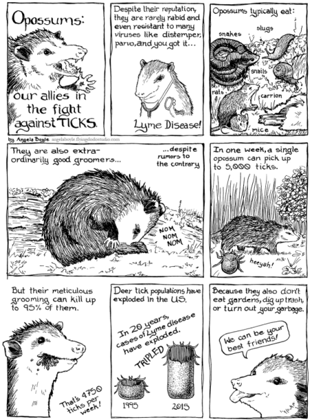 ABoyle-OpossumTicks